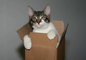 Cujo kitty in a box